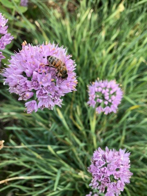 Honeybee Heroes